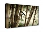 Bambusz mező vászonkép