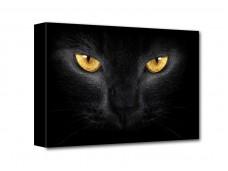 Fekete macska vászonkép