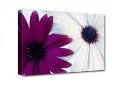 Lila-fehér virágok vászonkép