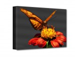 Pillangó vászonkép